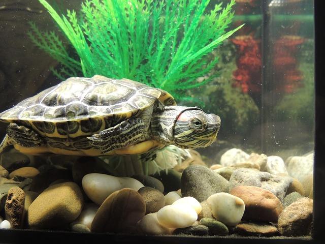 želva v akváriu