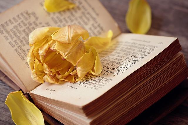 kvet na knihe.jpg