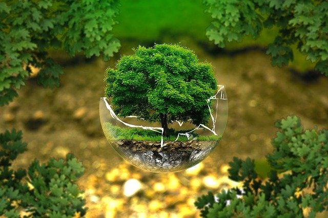 strom v bubline.jpg